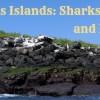 Featured Image Sharks Sea Lions Las Grietas 6.13.16