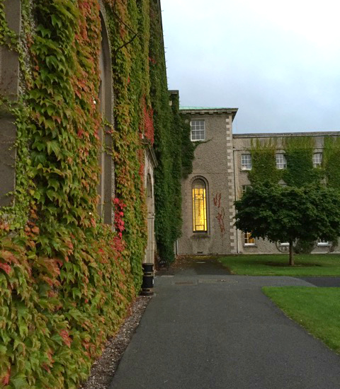 early-morning-ivy-maynooth-university-ireland-taken-8-20-16-by-zephy